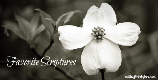 Favorite Scriptures