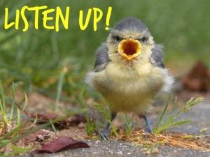 bird open mouth