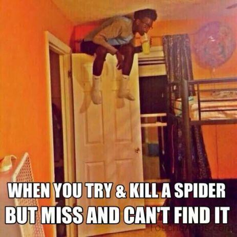 find a spider