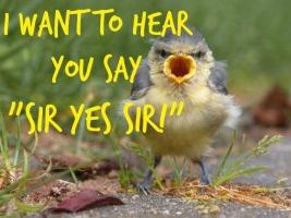 say sir yes sir